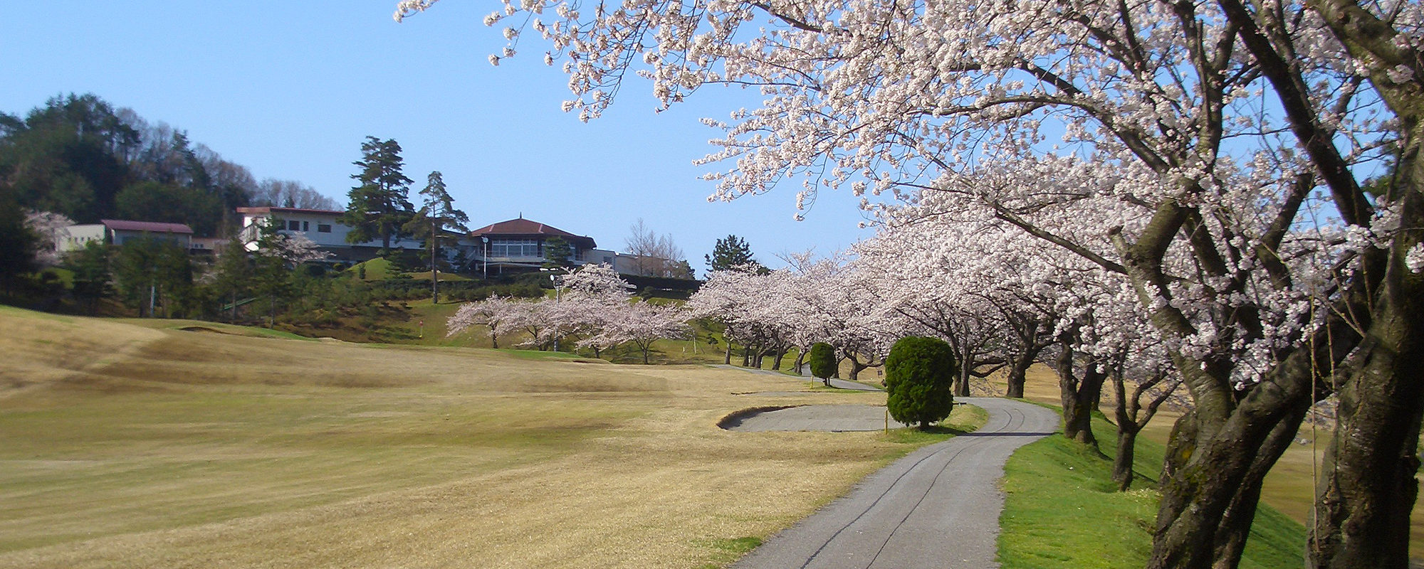 Hole09 桜シーズン